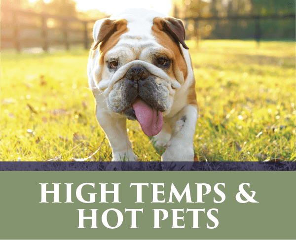 High Temps and Hot Pets